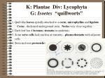 k plantae div lycophyta g isoetes quillworts3