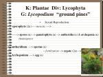 k plantae div lycophyta g lycopodium ground pines6