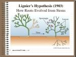 lignier s hypothesis 1903 how roots evolved from stems