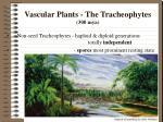 vascular plants the tracheophytes 300 mya
