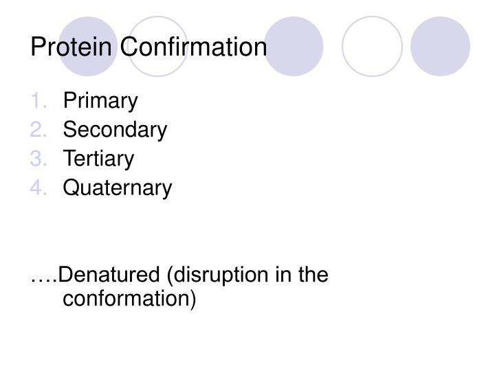 Protein Confirmation
