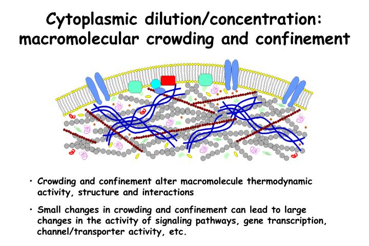 Cytoplasmic dilution/concentration: