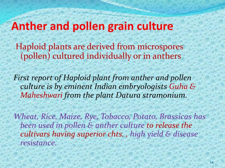 Anther and pollen grain culture