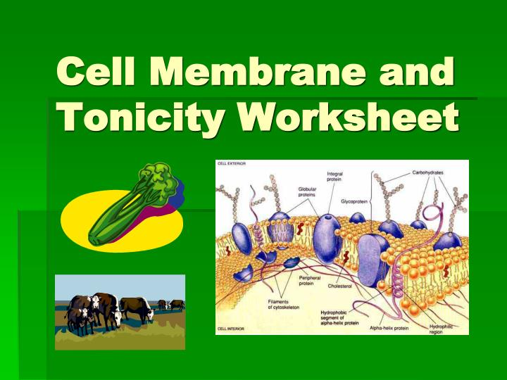 Ppt Cell Membrane And Tonicity Worksheet Powerpoint