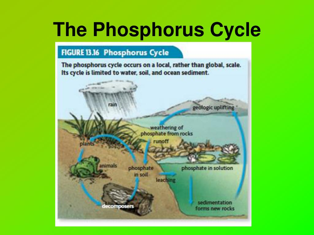 PPT - Chapter 13: Principles of Ecology PowerPoint ...