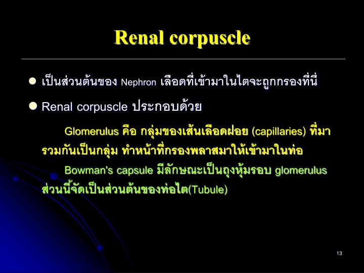 Renal corpuscle