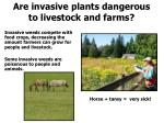 are invasive plants dangerous to livestock and farms
