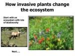 how invasive plants change the ecosystem