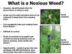 what is a noxious weed