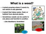 what is a weed