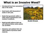 what is an invasive weed