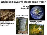 where did invasive plants come from