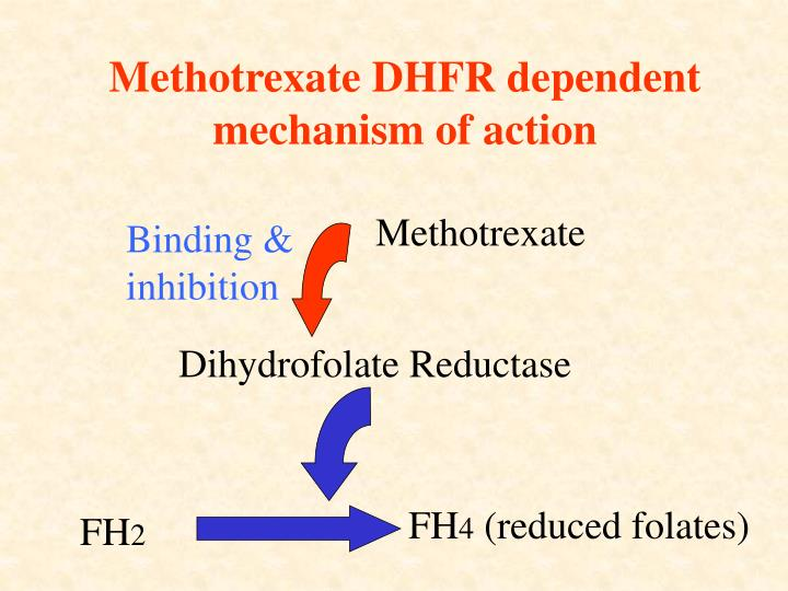 Methotrexate DHFR dependent mechanism of action