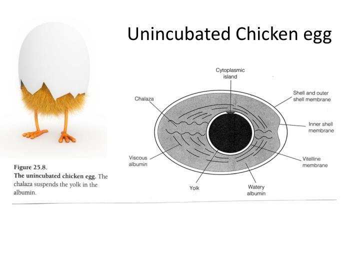 Unincubated