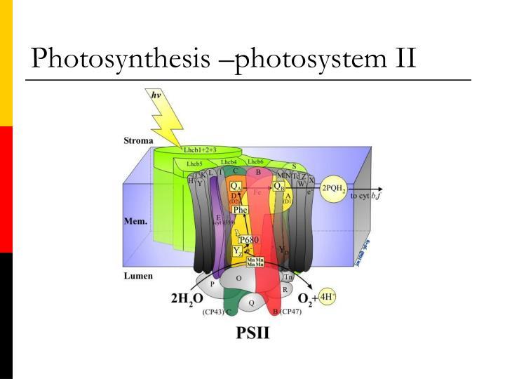 Photosynthesis –photosystem II