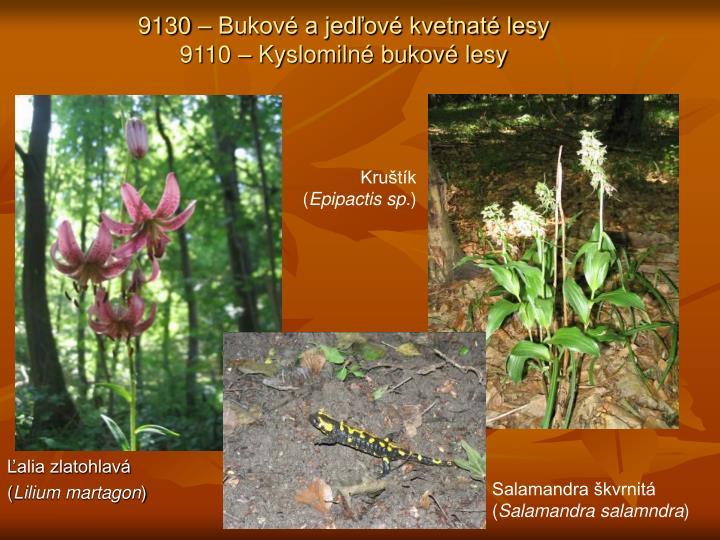 9130 – Bukové a jedľové kvetnaté lesy