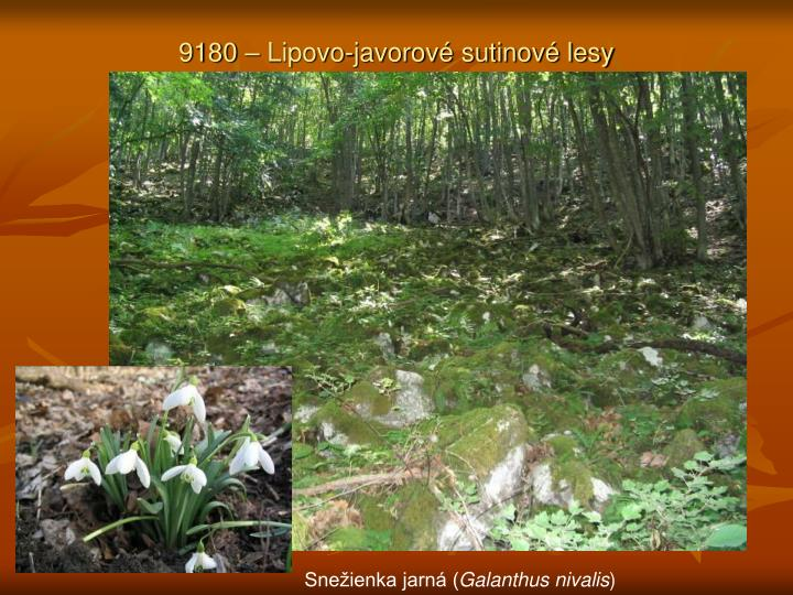9180 – Lipovo-javorové sutinové lesy
