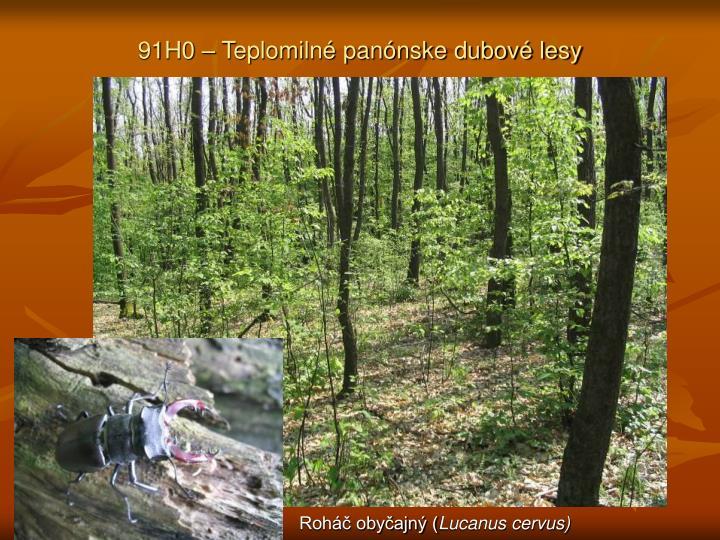 91H0 – Teplomilné panónske dubové lesy