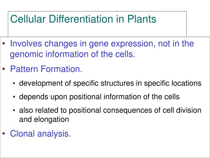 Involves changes in gene expression, not in the genomic information of the cells.