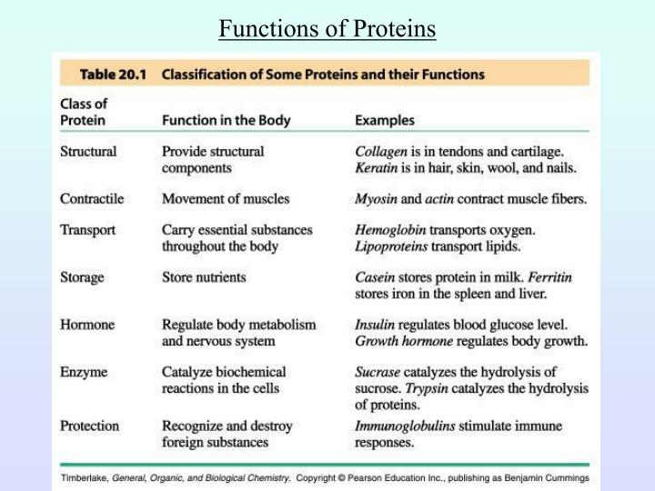 structure and functions proteins timed essay done 30mins h The structure and functions of proteins this was a timed essay done in 30mins human biology describe the process of protein synthesis in your own words, including the roles of mrna and trna you must include diagrams to aid in your explanations good - 1543 words.