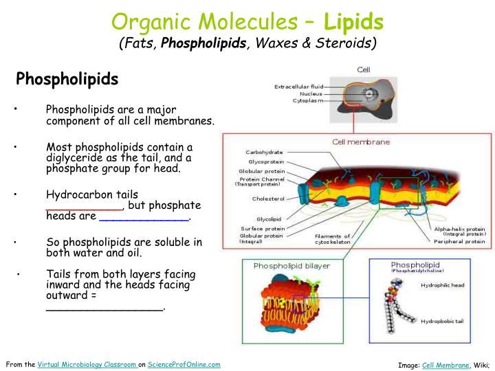 Organic Molecules –