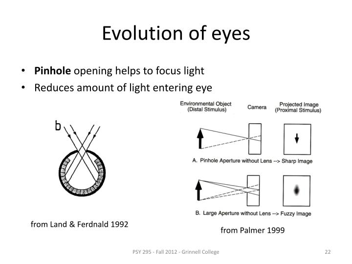 Evolution of eyes