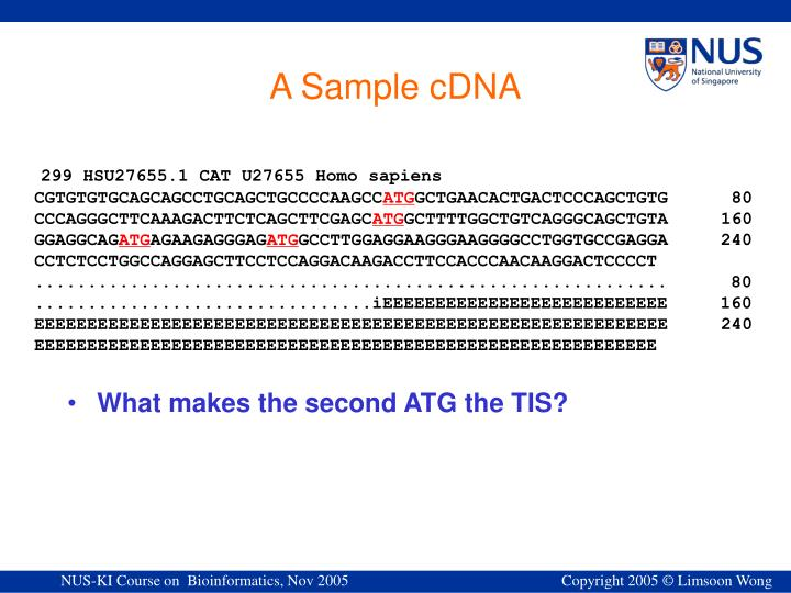A Sample cDNA