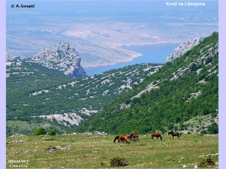 Konji na Libinjama