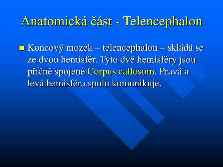 Anatomick st telencephalon