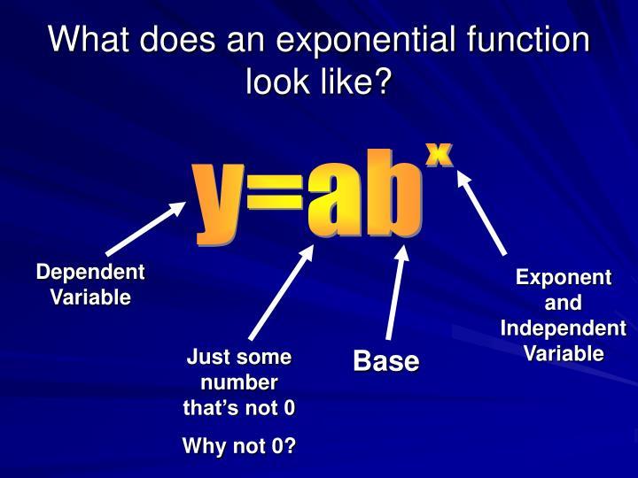 Exploring Exponential Models Essay Help Muassignmentqjuaeteria
