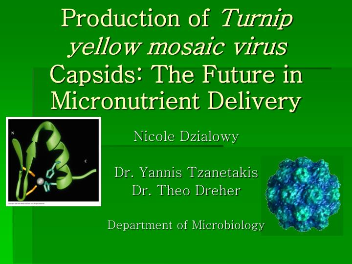 production of turnip yellow mosaic virus capsids the future in micronutrient delivery n.