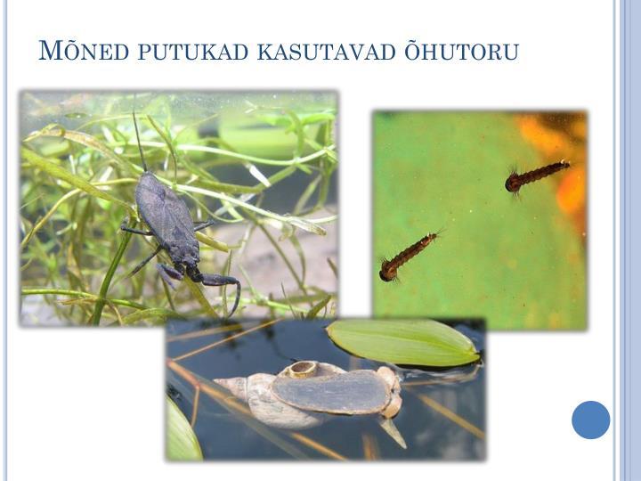 Mõned putukad kasutavad õhutoru