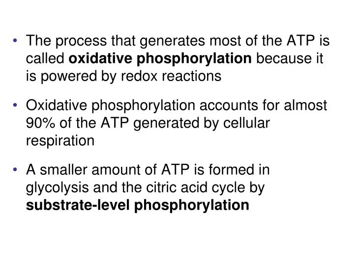 The process that generates most of the ATP is called