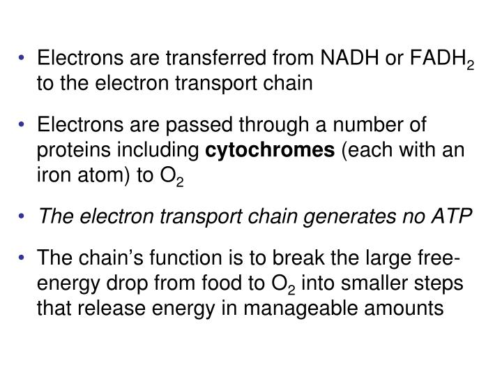 Electrons are transferred from NADH or FADH