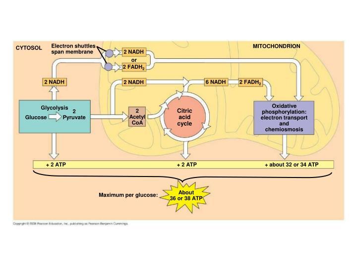 Electron shuttles