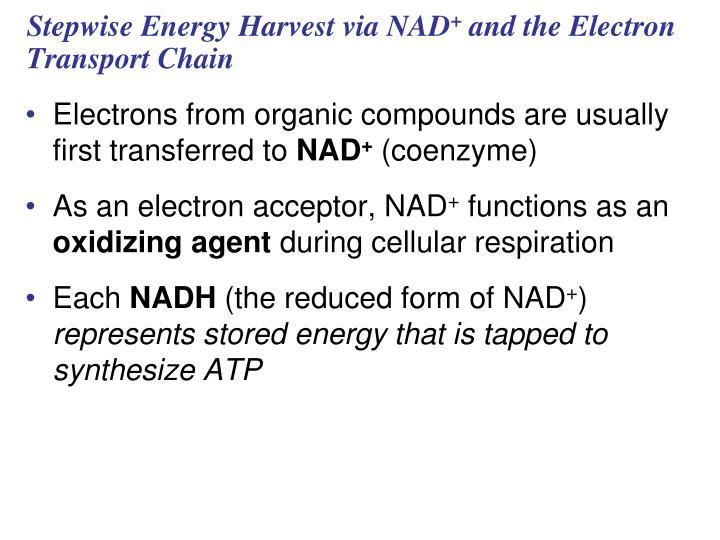Stepwise Energy Harvest via NAD
