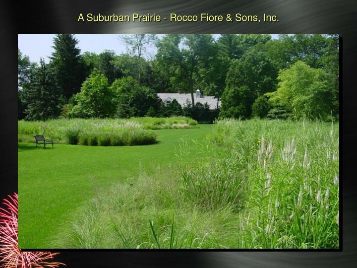 A Suburban Prairie - Rocco Fiore & Sons, Inc.
