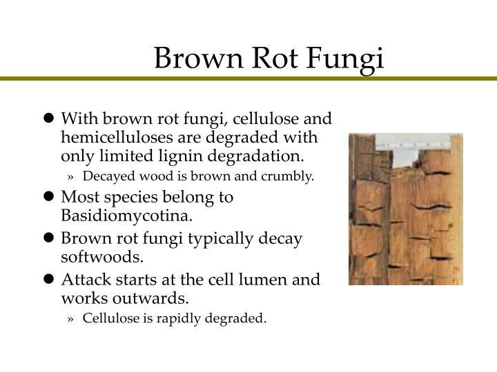 Brown Rot Fungi