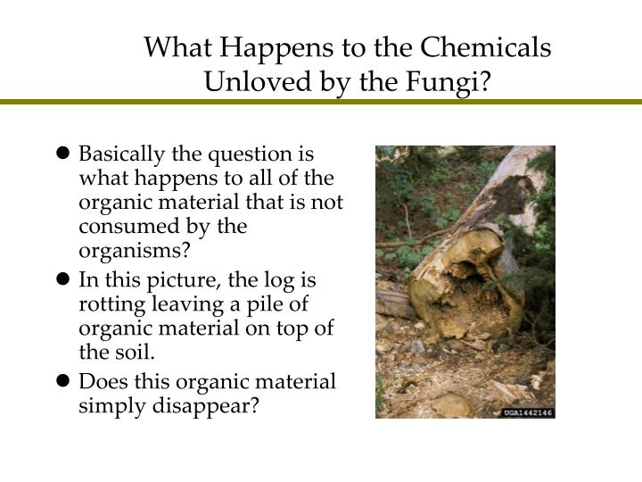 What Happens to the Chemicals Unloved by the Fungi?