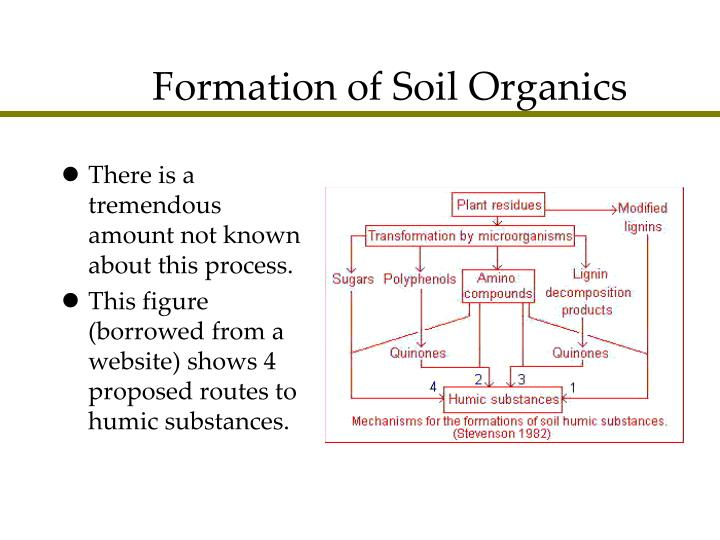 Formation of Soil Organics