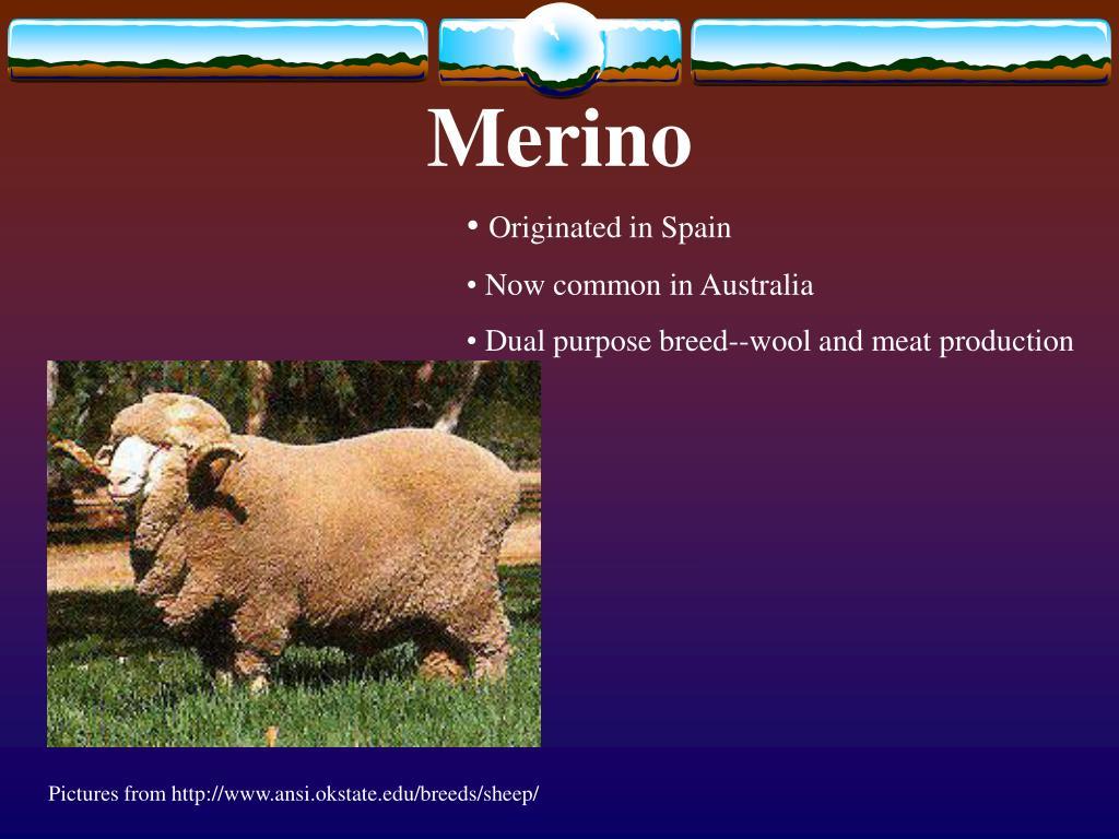 PPT - Sheep Breeds PowerPoint Presentation - ID:2989633