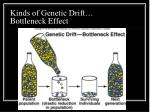 kinds of genetic drift bottleneck effect
