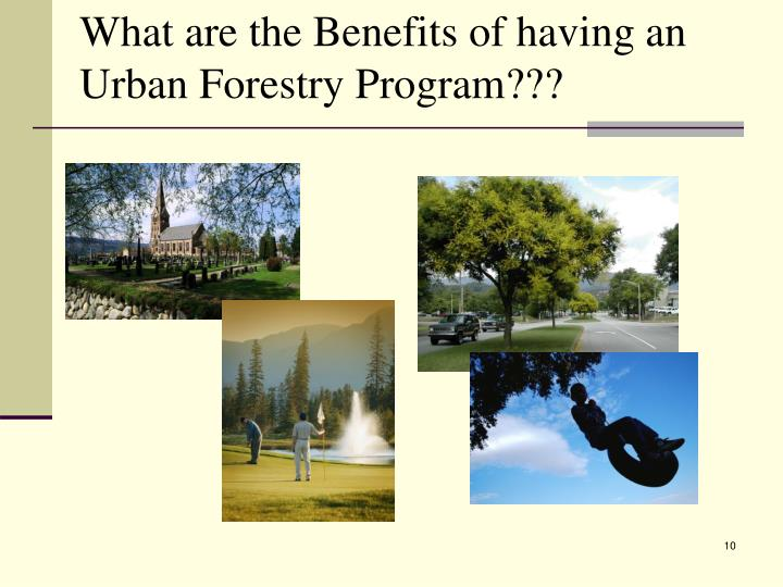 What are the Benefits of having an Urban Forestry Program???