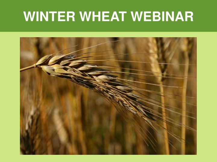 PPT - WINTER WHEAT WEBINAR PowerPoint Presentation - ID:2990600