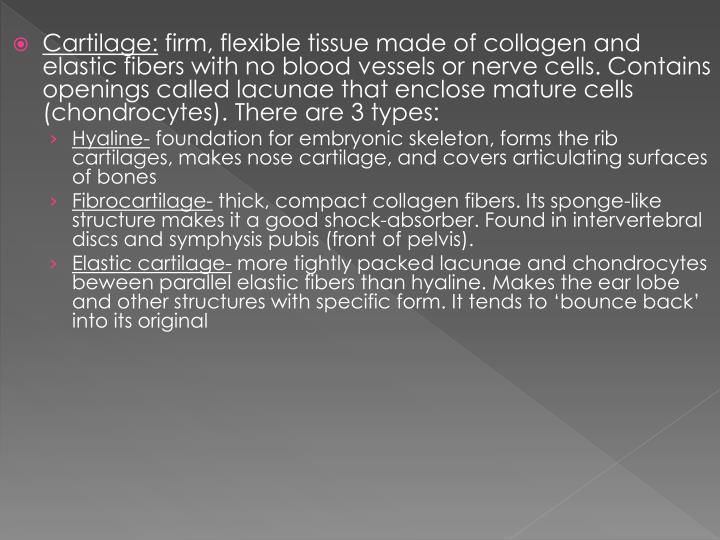 Cartilage: