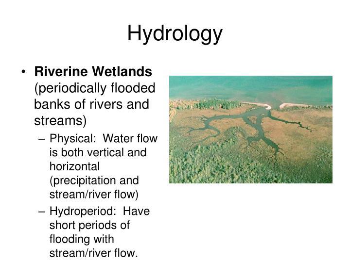 Riverine Wetlands
