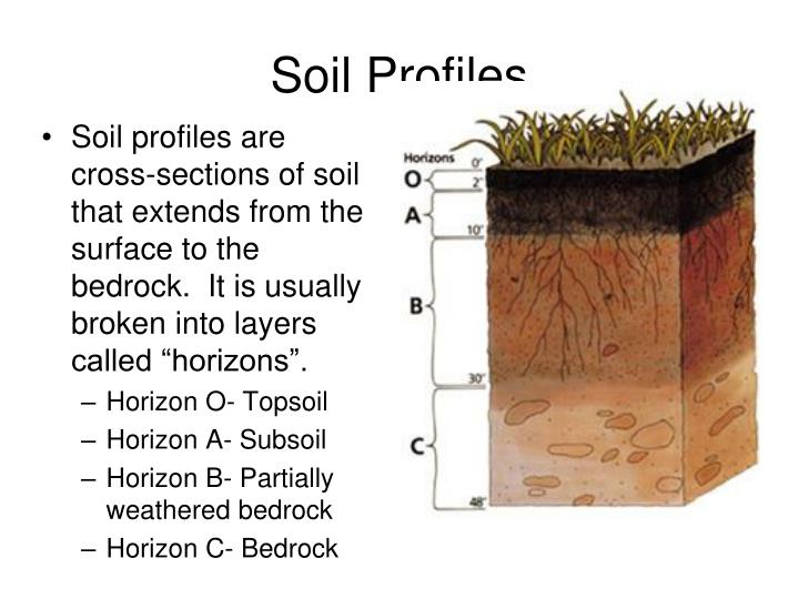 """Soil profiles are cross-sections of soil that extends from the surface to the bedrock.  It is usually broken into layers called """"horizons""""."""