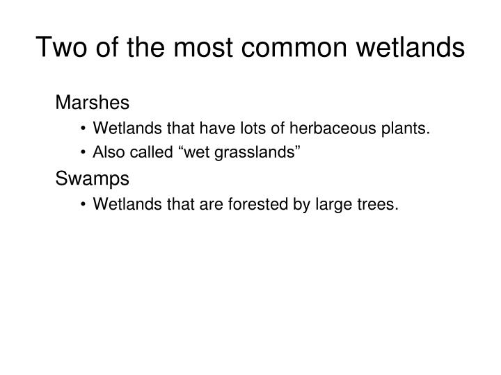 Two of the most common wetlands