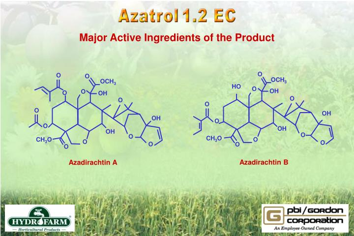 Major Active Ingredients of the Product