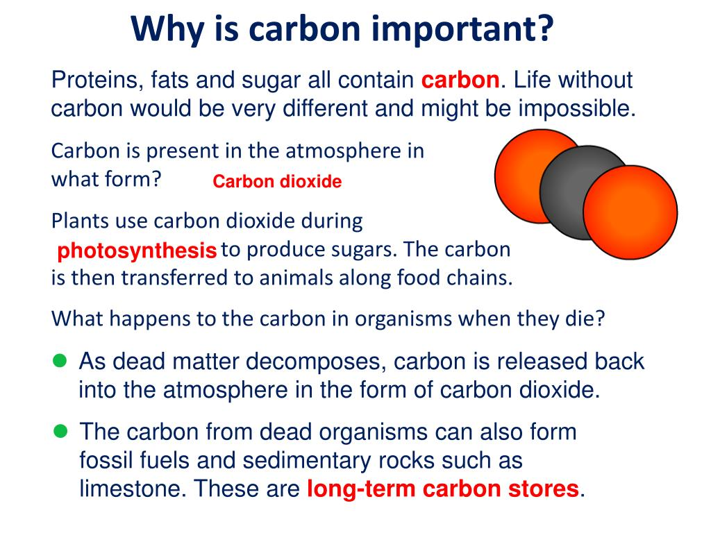 PPT - Air and Carbon Cycle: Carbon Cycle PowerPoint